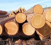 Предлагает к продаже лес - кругляк из России регионов Сибири!