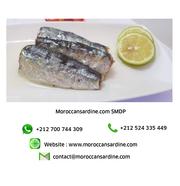 wholesale Moroccan sardines